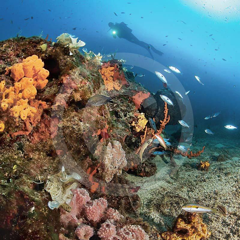 nurkowani bodrum gąbki i ryby - nurkowanie w bodrum