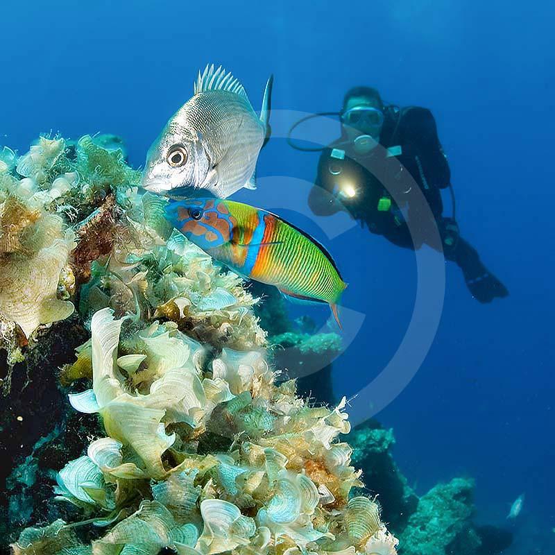nurkowanie w bodrum turcja - podwodna fauna i flora w Bodrum - instruktor i ryby