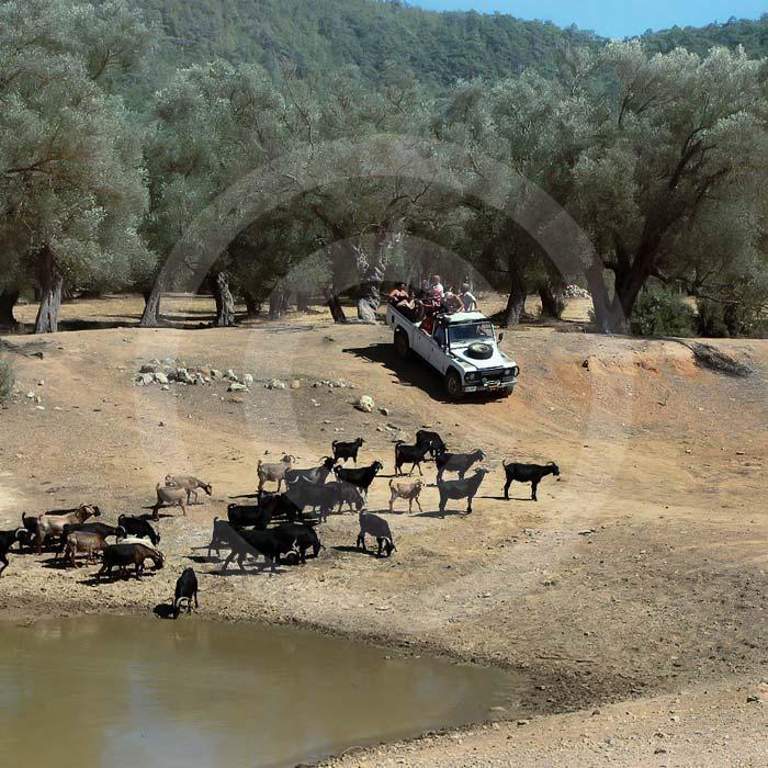 Jeep safari Bodrum.Wycieczka jeep safari w Bodrum.Jazda jeepami po górach, piękne widoki, tradycyjne wioski.